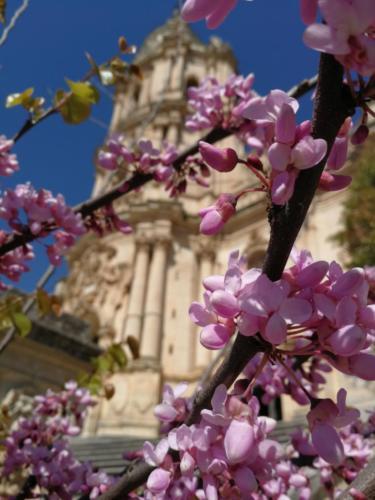Alberi in fiore davanti al Duomo di S. Giorgio a Modica,  foto di Dario Bottaro